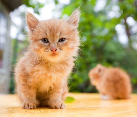 Cute Little Cats