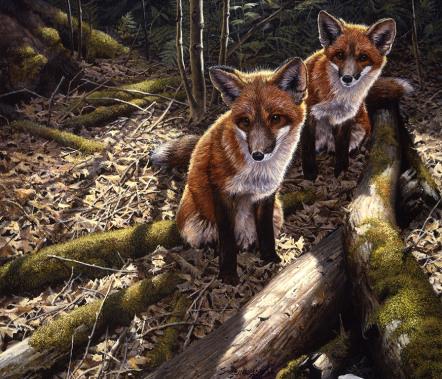 John Seerey-Lester - Woodland Creatures