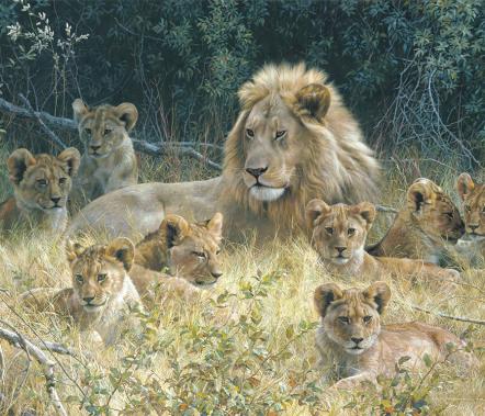 Carl Brenders - Wild Families
