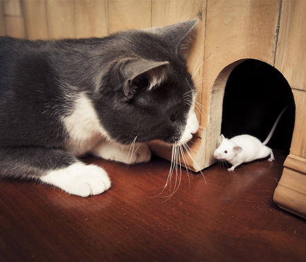 Cats and Mouses