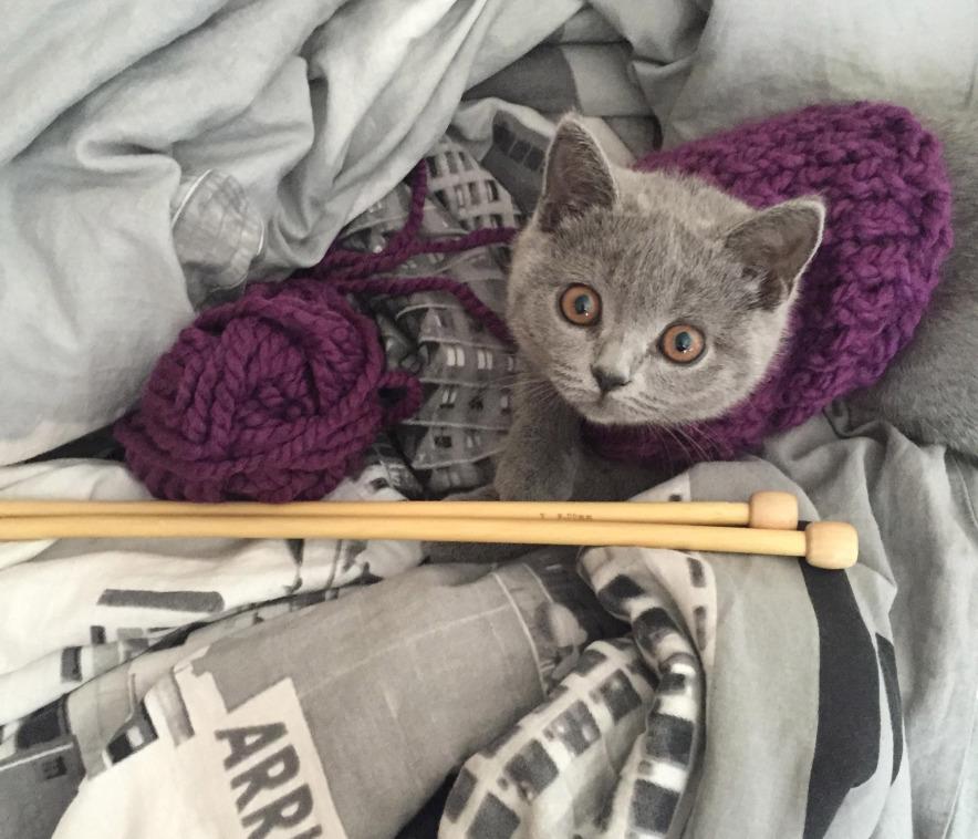 Kitty Knitting